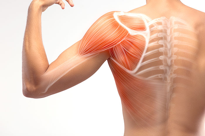 Regenerative Medicine for Shoulders